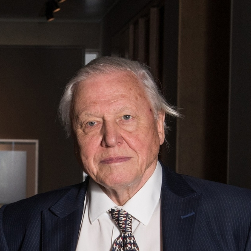 David Attenborough (forrás: wikipedia)